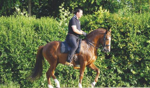 Buch Horse Becker